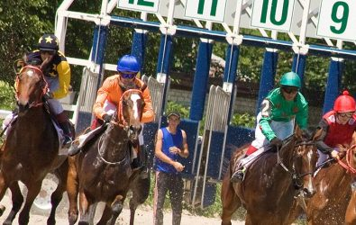 Race horses leaving the gate